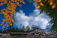 Beautiful, billowy white clouds drift above Handkerchief Lake in the Jewel Basin Montana. Golden autumn leaves frame the vision.