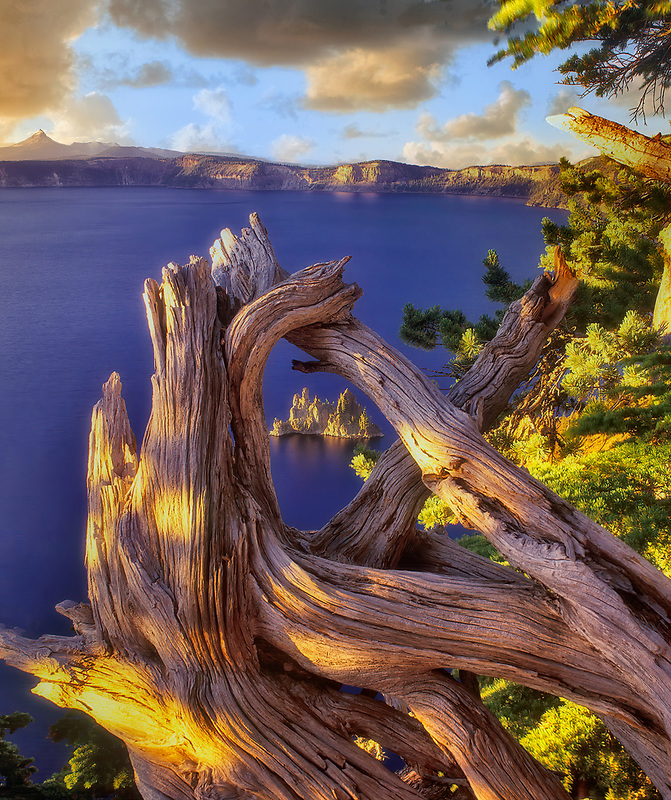 Crater Lake/Phantom Ship Island as seen through a twisted tree. Crater Lake National Park, Oregon