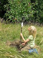 Kind, Junge pflanzt einen Obstbaum, Kirschbaum auf einer Wiese, Streuobstwiese, betrachtet seinen neu gepflanzten Baum
