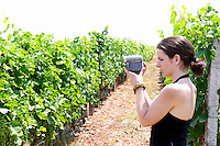 Radost filming in the vineyard. Kantina Miqesia or Medaur winery, Koplik. Albania, Balkan, Europe.