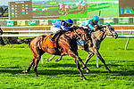 SEPT 28, 2019 :  Structor with Irad Ortiz Jr, wins the $200,000 Pilgrim Stakes, for two year olds on the turf, at Belmont Park, in Elmont, NY, Sept 7, 2019. Sue Kawczynski_ESW_CSM,