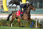 SHA TIN,HONG KONG-DECEMBER 09 : Garlingari,trained by Corine Barande-Barde,exercises in preparation for the Hong Kong Cup at Sha Tin Racecourse on December 9,2017 in Sha Tin,New Territories,Hong Kong (Photo by Kaz Ishida/Eclipse Sportswire/Getty Images)