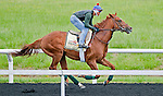 Animal Kingdom, winner of the 137th Kentucky Derby, continues to train for the Preakness at the Fair Hill Training Center on May 18, 2011 in Fair Hill, Maryland.
