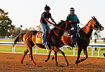 October 22, 2015:  Private Zone, trained by Jorge Navarro, and owned by Good Friends Stable, is entered in the Breeder's Cup TwinSpires Sprint.  Candice Chavez/ESW/CSM