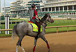 LOUISVILLE, KY - MAY 02: Lani (Tapit x Heavenly Romance, by Sunday Silence) walks toward the schooling gate at Churchill Downs, Louisville KY, in preparation for the Kentucky Derby. He is ridden by exercise rider Eishu Mariuuchi. Owner Koji Maeda, trainer Mikio Matsunaga.  (Photo by Mary M. Meek/Eclipse Sportswire/Getty Images)