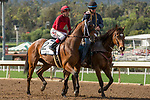ARCADIA, CA  MARCH 24: #2 Itsinthepost, ridden by Tyler Baze, in the post parade of the San Luis Rey Stakes (Grade ll), on March 24, 2018 at Santa Anita Park, in Arcadia, CA(Photo by Casey Phillips/ Eclipse Sportswire/ Getty Images)