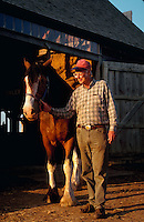 Man with a Clydesdale horse.