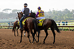 """DEL MAR, CA  JULY 28: #4 Ollie's Candy, ridden by Kent Desormeaux, in the post parade before the Clement L Hirsch Stakes (Grade 1) a Breeders' Cup """"Win and You're In"""" Distaff Division (Photo by Casey Phillips/Eclipse Sportswire/CSM)"""