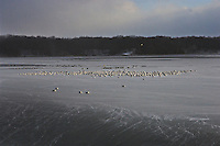 Seagulls sit on ice formed at the center of ice on Hoover Reservoir.