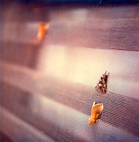 Moths on screen door<br />