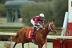 HOT SPRINGS, AR - FEBRUARY 20: #1 Gun Runner, with Florent Geroux aboard, crossing the finish line in the the Razorback Handicap at Oaklawn Park on February 20, 2017 in Hot Springs, Arkansas. (Photo by Justin Manning/Eclipse Sportswire/Getty Images)