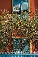 Europe/France/06/Alpes-Maritimes/Menton: Fenêtre d'une maison de la vieille ville et citronnier