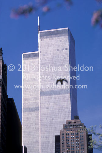 World Trade Center buildings with silhouette of bird<br />