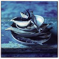 Europe/France/Provence-Alpes-Côte d'Azur/13/Bouches-du-Rhône/Marseille:  Sardines - Stylisme : Valérie LHOMME // France, Bouches du Rhone, Marseille, european capital of culture 2013, sardines (design by Valerie Lhomme)