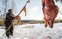 Evemki hunetr, Ion Maxsimovic puts the skin of a wolf onto a wooden frame to dry while the carcass hangs from a nearby tree. The pelt will be sold to the fur trade where they are made into clothing or rugs.   An explosion of the wolf population has had a devastating impact on the reindeer herds that are the lifeblood for the indigenous Evenki people of the Siberian state of Sakha (Yakutia). In 2012 it was estimated that between 12,000 - 16,000 reindeer were lost to wolf attacks, at a cost of around 15,000 rubles (153.00 GBP) per animal. In response the local authorities introduced a three month hunt with a bounty to encourage hunters to target wolves with the aim of reducing their numbers from 3,500 to 500. Hunters earn 400 USD (280 GBP) per proven kill, plus a further 400 USD (280 GBP) selling the skin to the fur trade. Ion Maksimovic, the region's most celebrated wolf hunter, killed 23 wolves in 2014, more than any other hunter, and in doing so won a prize of 300,000 roubles (3,060 GBP) and a snowmobile.