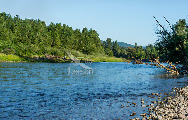 Nisqually River, WA.  Summer. The green trees on the opposite bank are part of Healey Property.