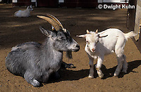 SH05-009z  Goat - adult with kid