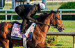 April 26, 2021: Search Results, trained by trainer Chad Brown, exercises in preparation for the Kentucky Oaks at Churchill Downs on April 26, 2021 in Louisville, Kentucky. Scott Serio/Eclipse Sportswire/CSM