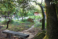 Stepping stone path through groundcovers leading to rustic wooden bench under oak tree in shady, naturalistic California country garden