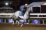 DEL MAR, CA - NOVEMBER 01: Fanciful Angel owned by Mrs. John Magnier, Michael Tabor, Derrick Smith  & Markus Jooste and trained by Aidan P. O'Brien, exercises in preparation for Longines Breeders' Cup Turf during morning workouts at Del Mar Thoroughbred Club on November 1, 2017 in Del Mar, California. (Photo by Michael McInally/Eclipse Sportswire/Breeders Cup)