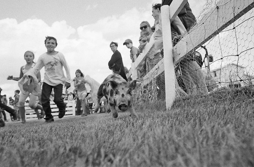 The Pig Scramble at the 111th Annual Biggest Little Fair in Creelman, Saskatchewan, 2015. MARK TAYLOR GALLERY