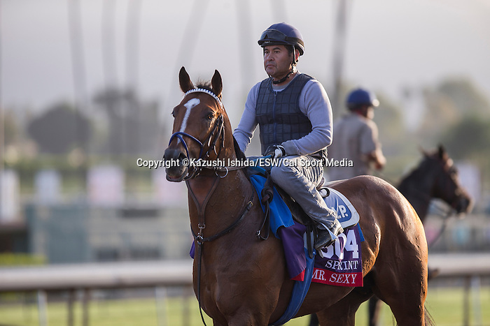 OCT 27 2014:Mr.Sexy, trained by George Papaprodromou, exercises in preparation for the Breeders' Cup Xpressbet Sprint at Santa Anita Race Course in Arcadia, California on October 27, 2014. Kazushi Ishida/ESW/CSM
