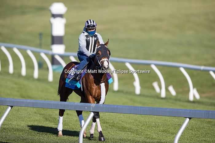Abarta, trained by Brad Cox, exercises in preparation for the Breeders' Cup Juvenile Turf at Keeneland 11.03.230.