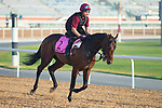 DUBAI,UNITED ARAB EMIRATES-MARCH 29: Mendelssohn,trained by Aidan O'Brien,exercises in preparation for the UAE Derby at Meydan Racecourse on March 29,2018 in Dubai,United Arab Emirates (Photo by Kaz Ishida/Eclipse Sportswire/Getty Images)