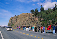 Tourists congregate along the Seward highway to view dall sheep ewes with lambs, southcentral, Alaska.