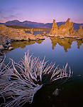 Mono Basin Scenic Area, CA  <br /> Pastel colors of dawn on a bleached sagebrush skeleton and distant tufa towers, from the south shore of Mono Lake