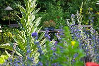 Unser Naturgarten in Hammer, Garten, insektenfreundlicher Garten, vogelfreundlicher Garten, blütenreich, Wildblumen, Wildblumengarten, Terrasse, Terasse, Kiesterasse, Sitzgelegenheit zwischen Blumen, Sitzplatz, mit Königskerze, Königskerzen, Natternkopf, Natternzunge, Mohn