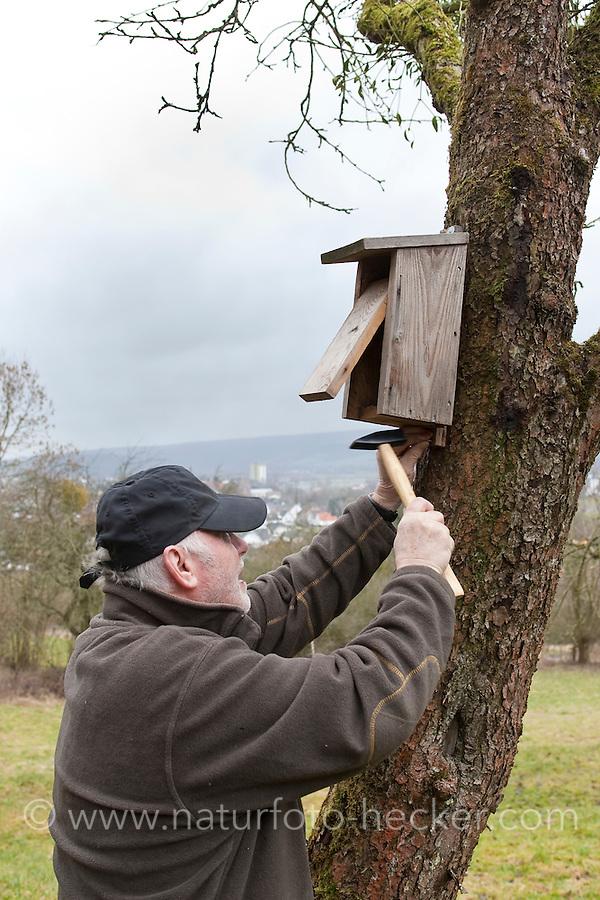 Nistkasten, Älterer Mann hängt Vogel-Nistkasten für Halbhöhlenbrüter in einem Obstbaum auf, Garten