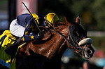 FEB 01: United with Flavien Prat wins the San Marcos at Santa Anita Park in Arcadia, California on Feb 01, 2020. Evers/Eclipse Sportswire/CSM