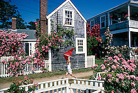 Cottage with roses and child with kite Nantucket, MA
