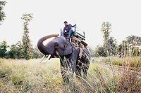 A worker at the Panna Tiger Reserve rides an elephant in the reserve.