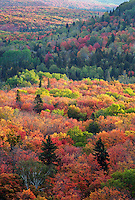 autumn trees covering the Sawtooth Mountains, viewed from Leveaux Mountain, Superior National Forest, Minnesota
