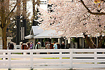 05 April 2010.  A beautiful morning for inspection of the Keeneland April 2 year old in training sale horses.