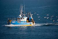 Europe/France/Bretagne/56/Morbihan/Quiberon/Port-Maria: Retour des  chalutiers