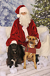 Zionsville Country Kennel Santa 2019