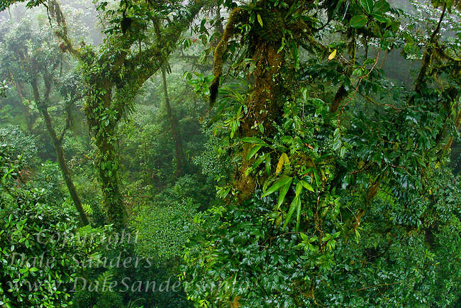 Monteverde Cloud Forest Biological Reserve, Costa Rica.