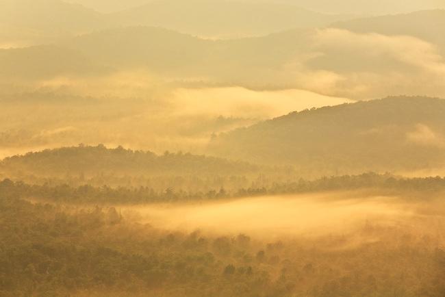 Fog and autumn maple trees, Graveyard Fields, Pisgah National Forest, Blue Ridge Parkway, North Carolina