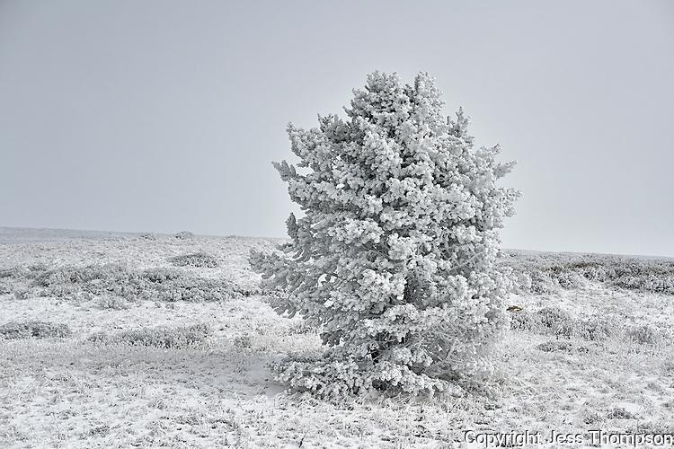 Rime Ice, Bighorn Mountains, Wyoming