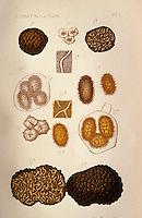 Europe/France/Midi-Pyrénées/46/Lot/Cahors: Planches de vieux livres sur la truffe - Collection Pebeyre