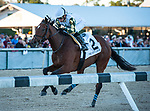 02-08-20 Sam F. Davis Stakes and Undercard Tampa Bay
