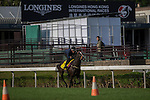 DEC 11,2015: Sole Power ,trained by Edward Lyam,exercises in preparation for the Hong Kong Sprint at Sha Tin in New Territories,Hong Kong. Kazushi Ishida/ESW/CSM
