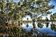 Image Ref: W021<br /> Location: Lake Yelwell, Hattah-Kulkyne National Park<br /> Date: 14th May 2014