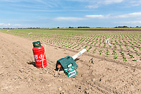 Gas gun on a lettuce field - Lincolnshire, August