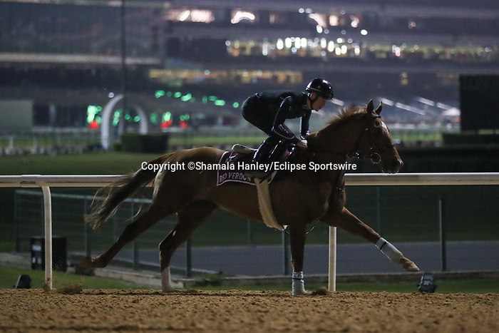 March 25, 2021: Gold Cup contender Red Verdon trains on the track for trainer Ed Dunlop at Meydan Racecourse, Dubai, UAE.<br />