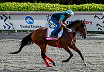 January 24, 2020: Bodexpress gallops as horses prepare for the Pegasus World Cup Invitational at Gulfstream Park Race Track in Hallandale Beach, Florida. John Voorhees/Eclipse Sportswire/CSM