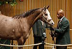 September 15, 2015: Hip 418 Tapit - Lovely Regina colt consigned by Baccari Bloodstock.   Candice Chavez/ESW/CSM